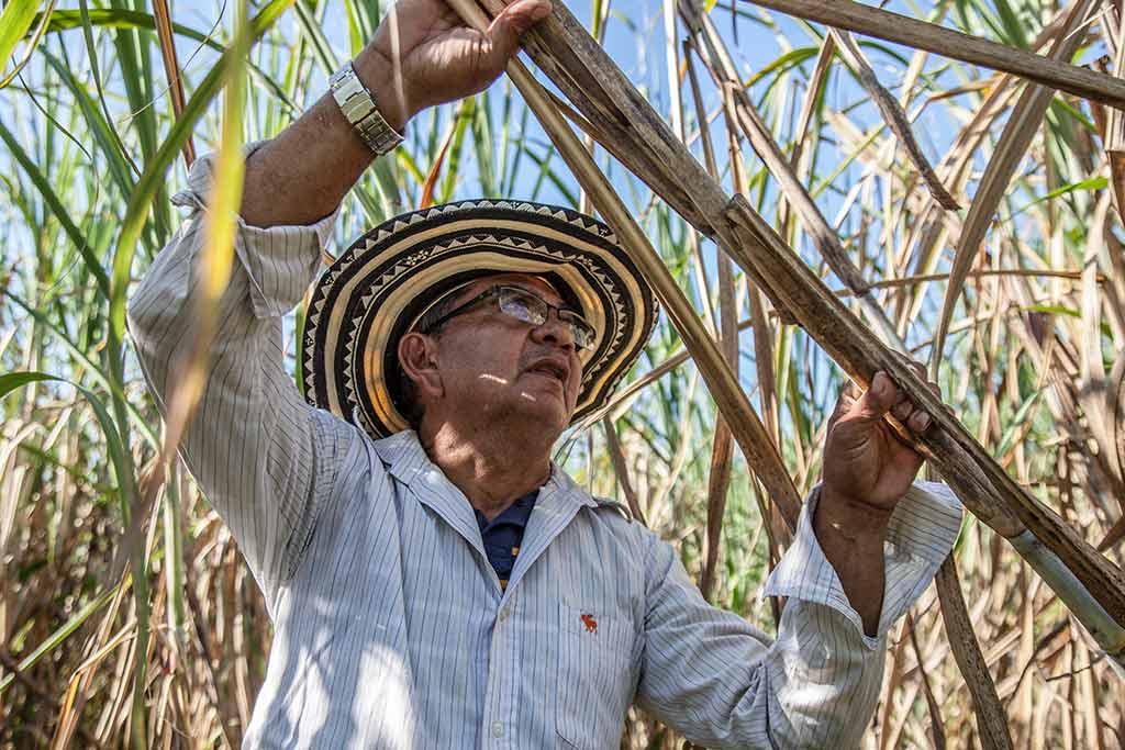 man-holding-a-sugar-cane